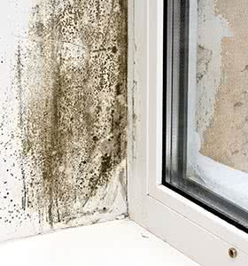 Mould Contamination